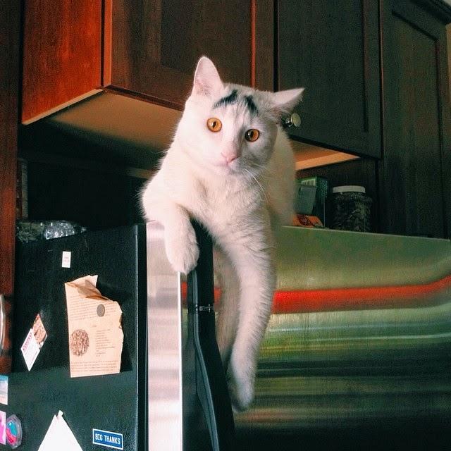 sam el gato con cejas