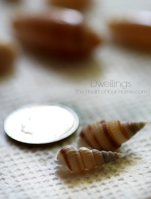 tiny seashells
