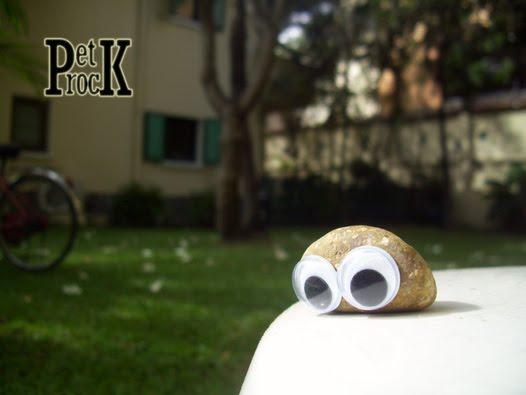 http://1.bp.blogspot.com/-FwHT7I2YFsM/TblqpkTHRXI/AAAAAAAAA3c/_E_wAInSPKE/s1600/Pet%2BRock.jpg
