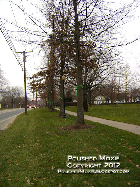 Image of row of trees in neighboring town to Sandy Hook decked out in green ribbons.