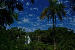 Rain Forest Brazil