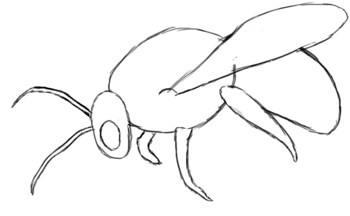 How to draw a bumble bee - photo#18