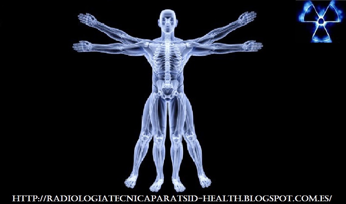 Radiologia e Imagionologia : Anatomía Radiológica Musculo ...