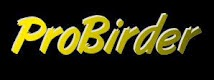 Probirder - Birding in Eastern Europe & Beyond