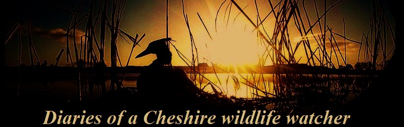Wildlife of Cheshire