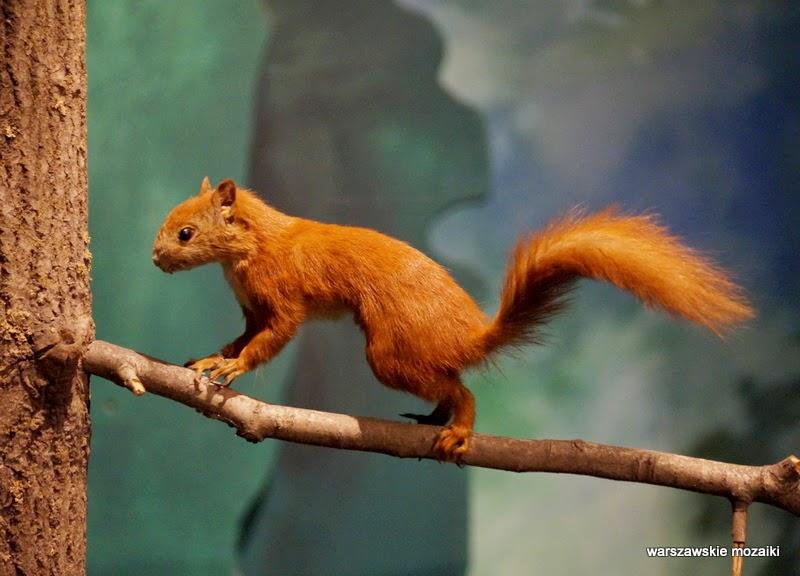 Łazienki Królewskie Warszawa zwierzęta polowanie wiewiórka drzewo