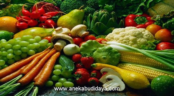 Peluang Usaha Budidaya Palawija dan Hortikultura