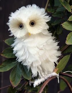 White-owl-beautiful-amazing