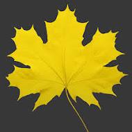 Осень - время мечтать!