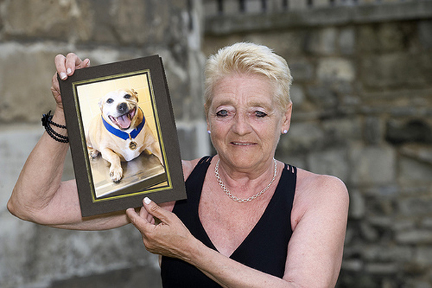 The Staffordshire bull terrier who protected her owner from a machete gang.