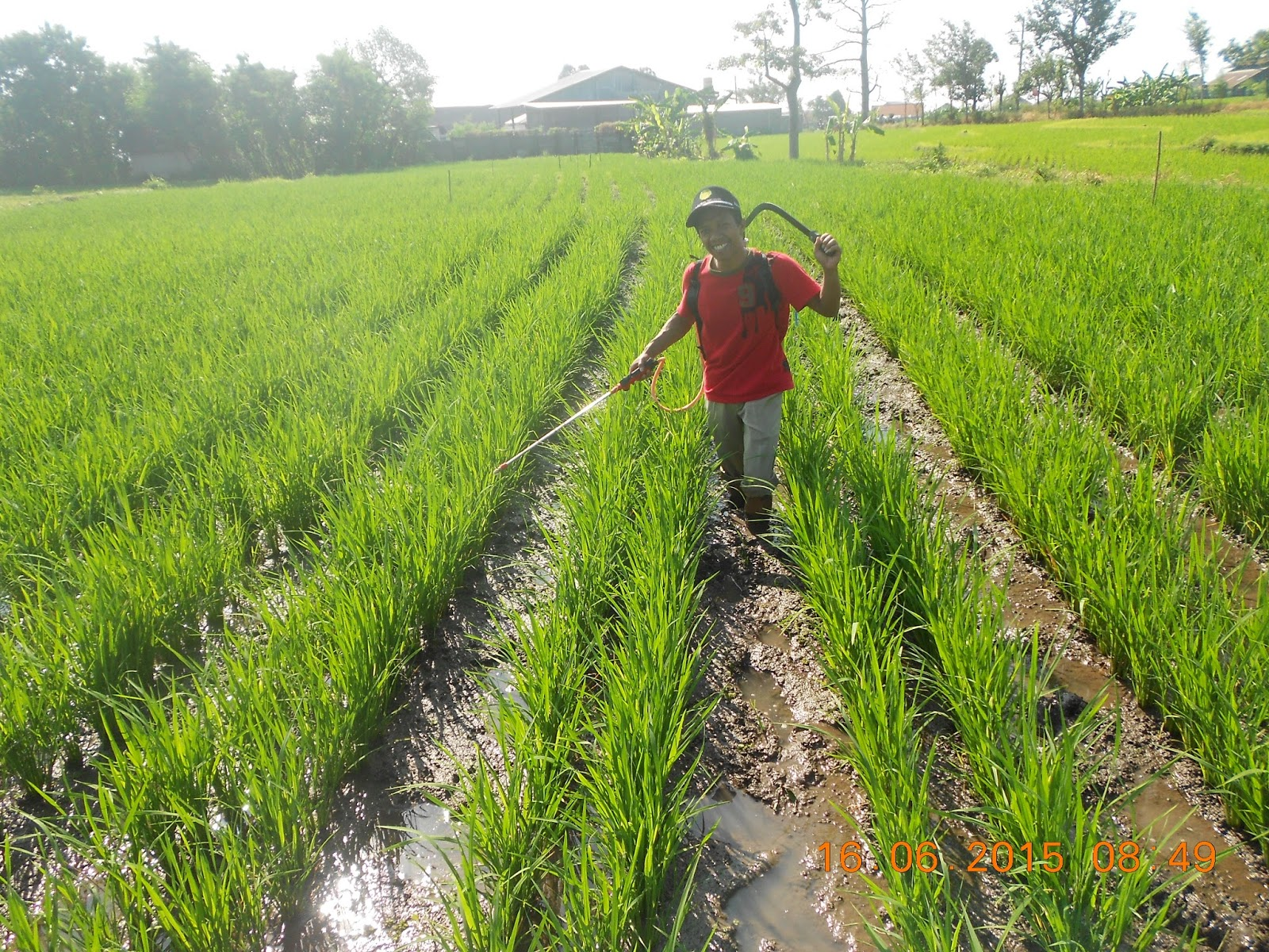 Ini Dia Aplikasi Pertanian Berbasis Telepon Pintar Berita Pertanian