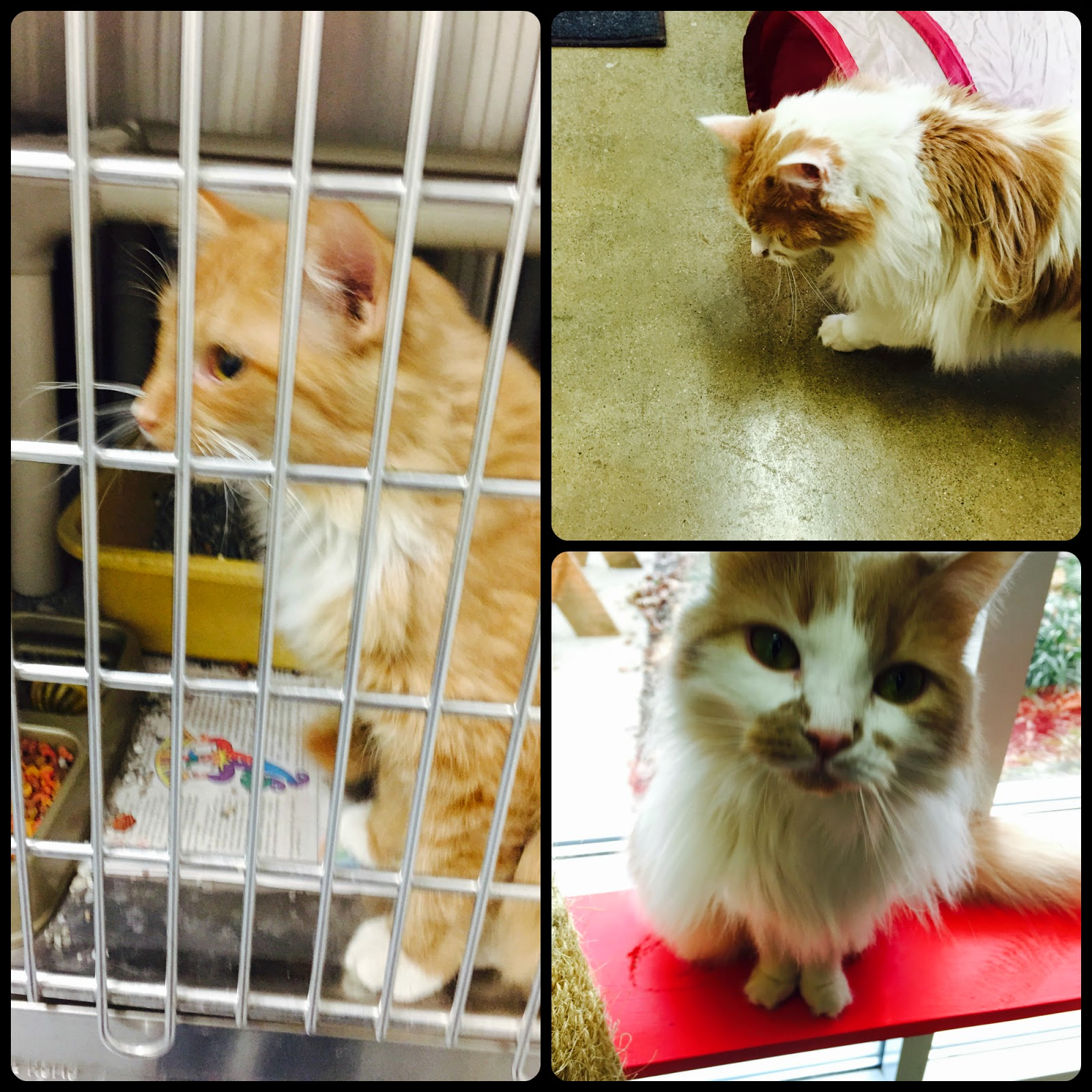 pretty-cats-for-adoption