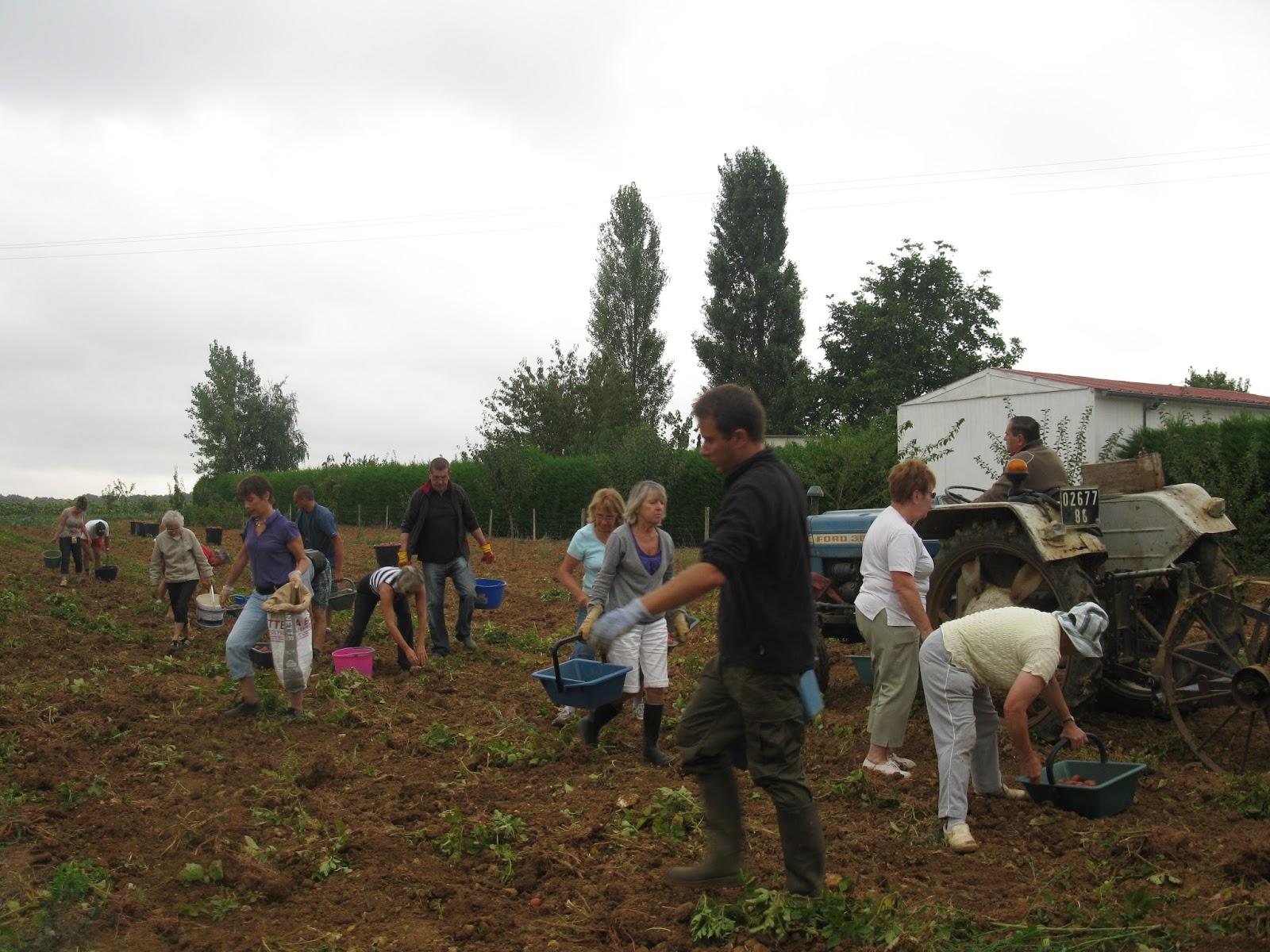 Les planteurs de patates m diocre saison 2013 - Pomme de terre prospere ...
