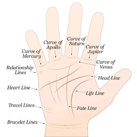 what does your palm line says about you