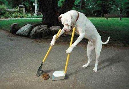 Hình ảnh vui về chú chó