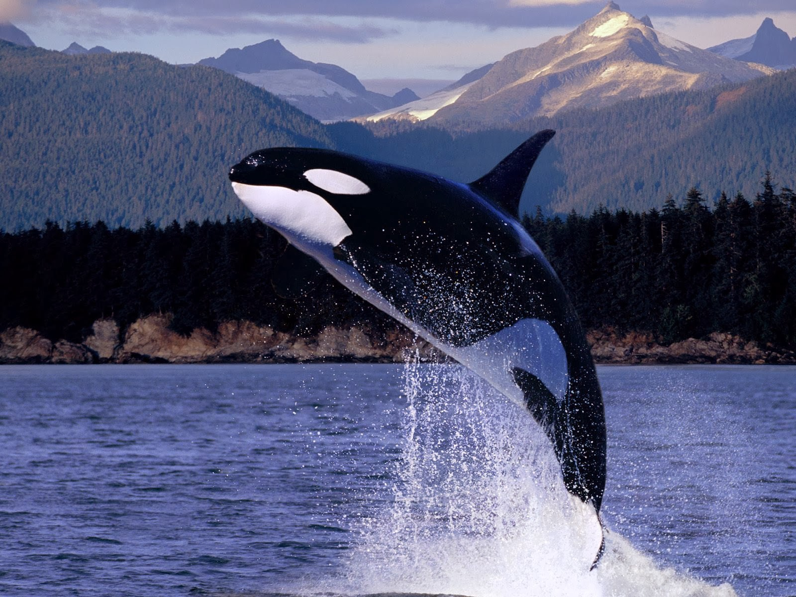 http://beautifulwallpapersfordesktop.blogspot.com/2014/01/beautiful-water-animals-wallpapers.html