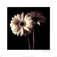 Davina Photography