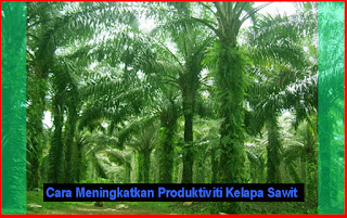 Cara Meningkatkan Produktiviti Kelapa Sawit