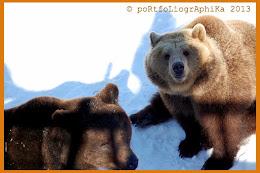 Karhut ovat heränneet / nenä tutkii