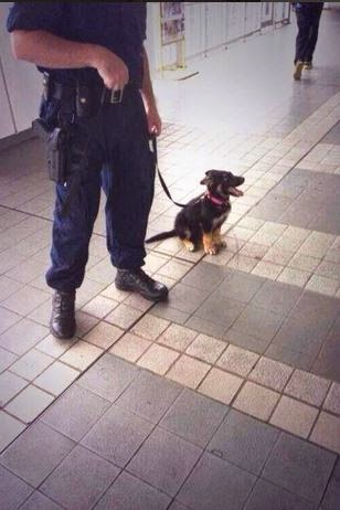 Cachorro policia