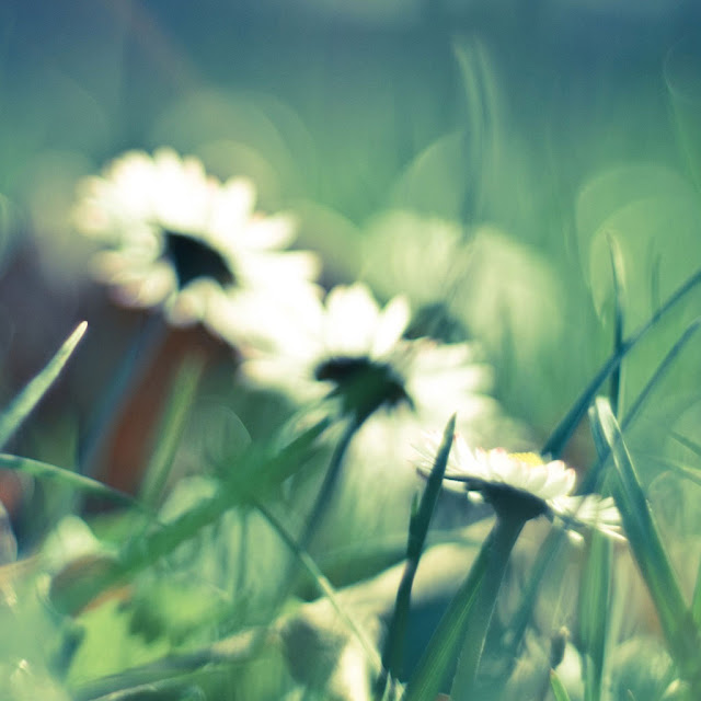 iPad Wallpaper - Daisies And Grass