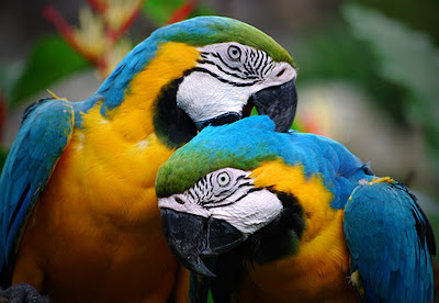 Cute Love Colorful Parrot