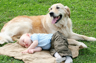 Dog with baby