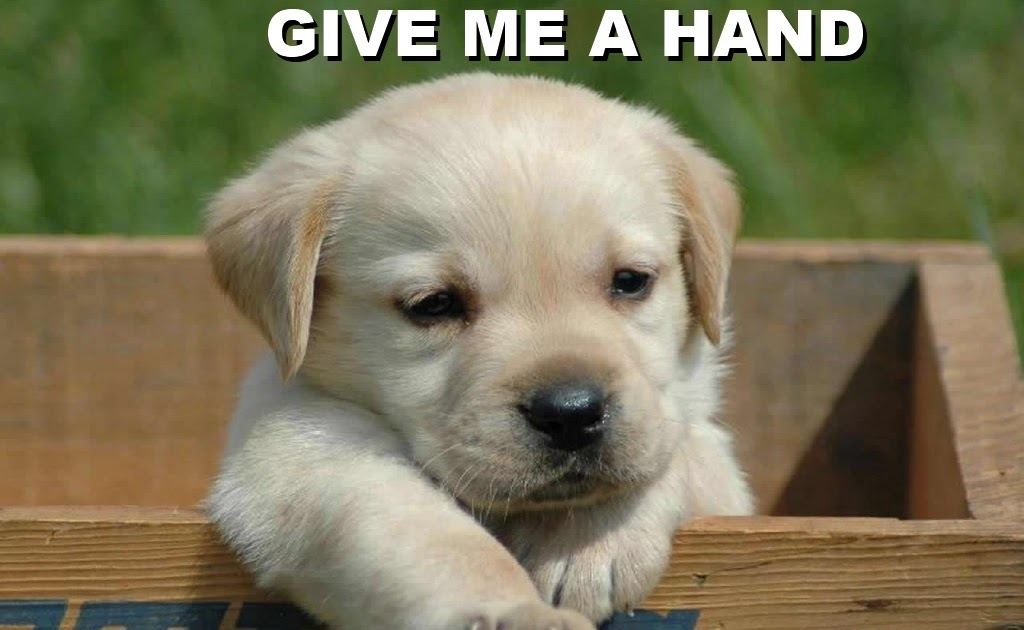 It is so cute!: Give me a hand :)