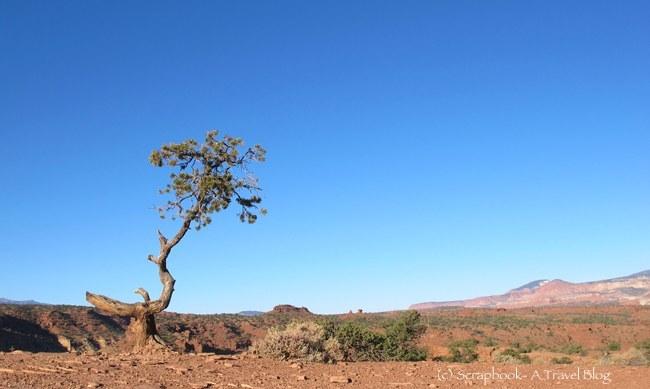 Lone Tree at Capitol Reef National Park, Utah