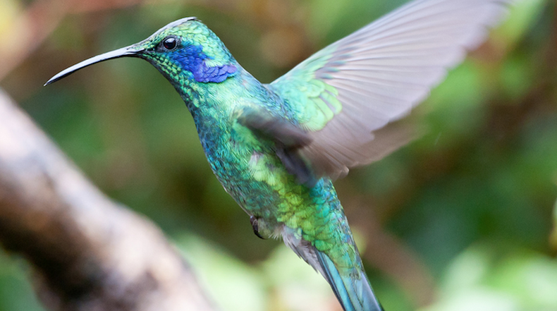 Increíbles macro fotos documentan detalles de los colibríes