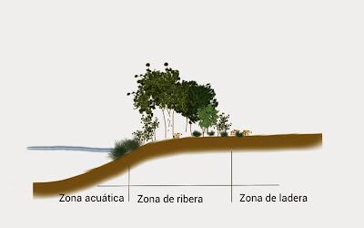 Definición de zona riparia o de ribera de río (I). Hikergoer.