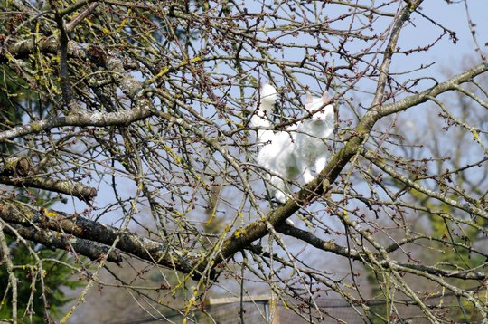 white cat in tree