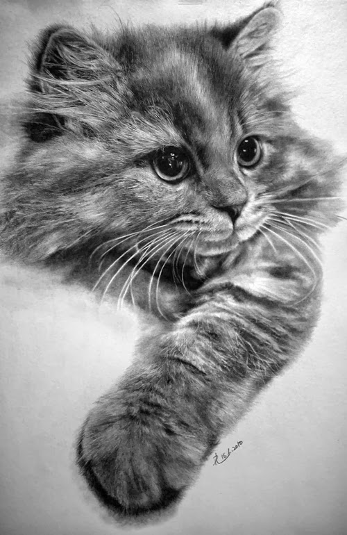 10-Hyper-realistic-Cats-Pencil-Drawings-Hong-Kong-Artist-Paul-Lung-aka-paullung-www-designstack-co