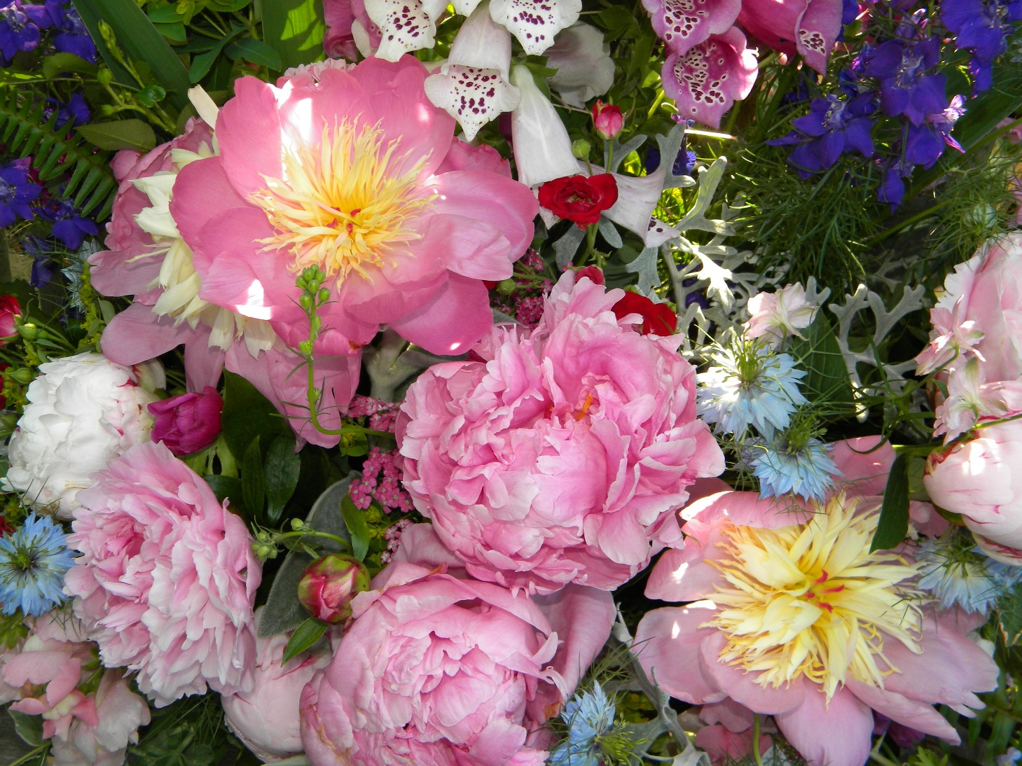 Garden Delight Rose Garden Delights Peonies And