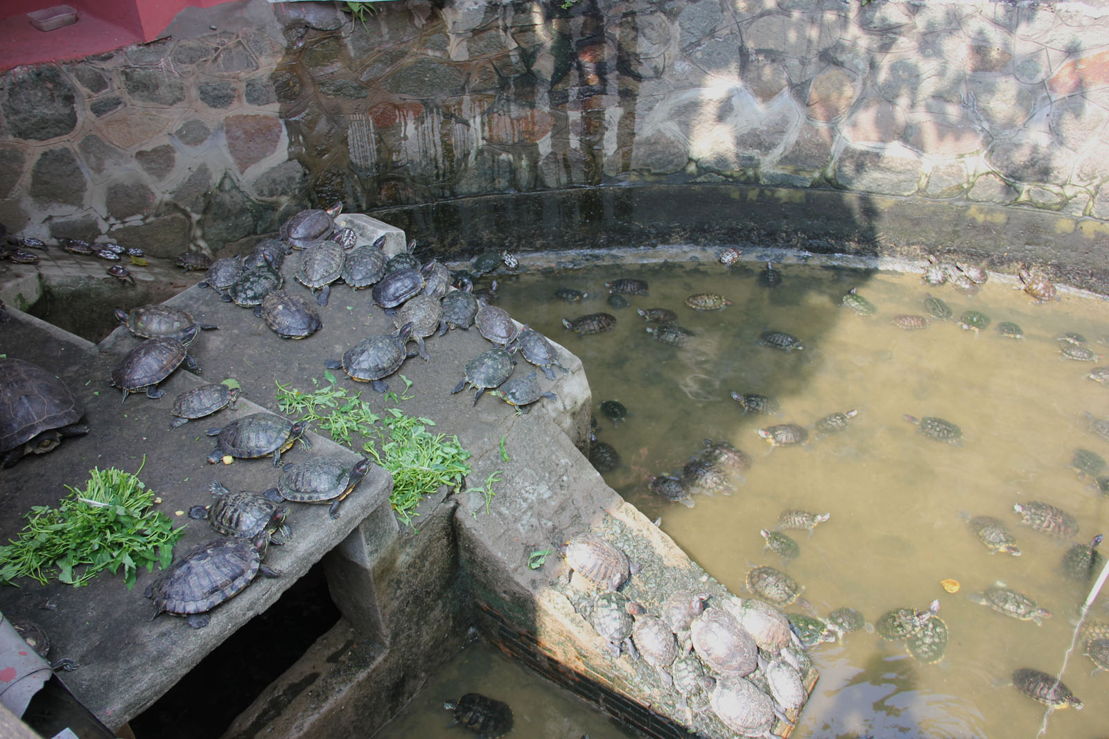 Como construir un estanque para tortugas tareas de - Estanque para tortugas ...