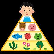 食物連鎖のピラミッドのイラスト