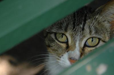 Cara menangani kucing yang takut petir