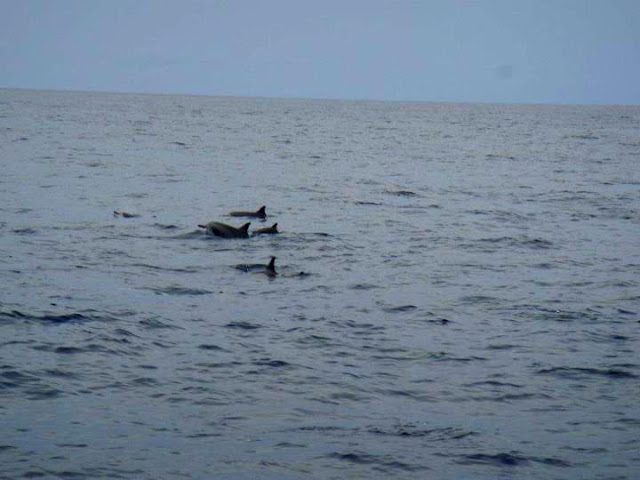 dolphin watching bohol