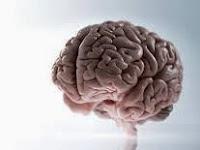 Pengobatan Herbal Kanker Otak