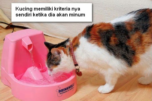 cara membujuk kucing minum di mangkuk, persuade cat use his water fountain