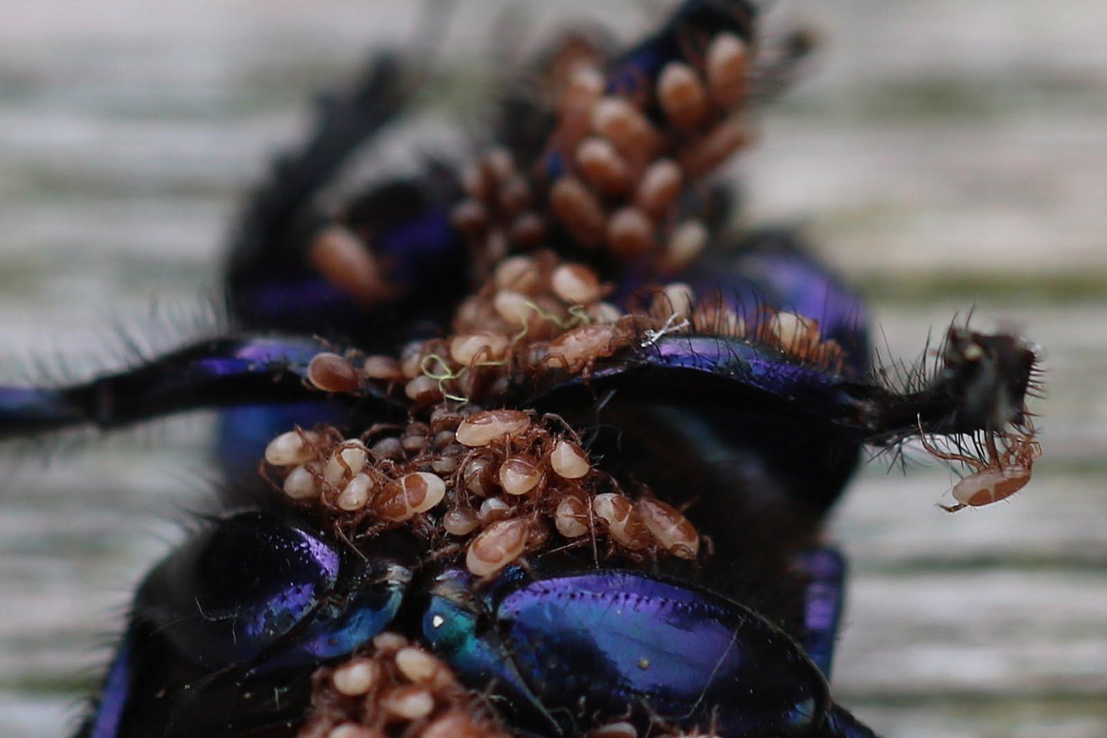 Kruipende Insekten