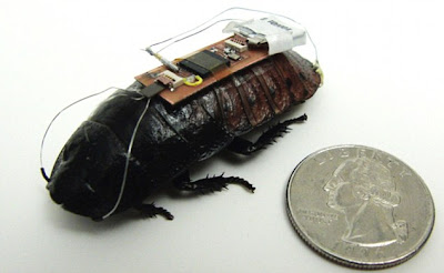 cucaracha robot cyborg
