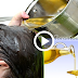 How To Oil Your Hair For Healthy Growth, Best Home Remedies