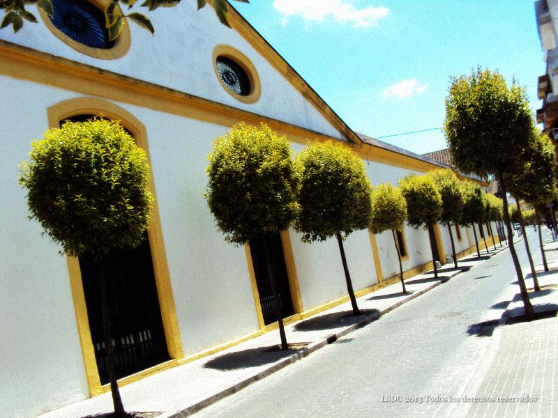 Calle Lealas
