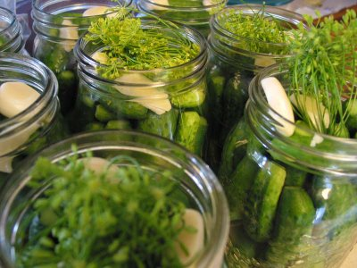 Pickle Things! Homemade Spicy Garlic Dill Pickles | The Food Liaison