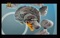Documentário - Neurociências (abra nova guia)