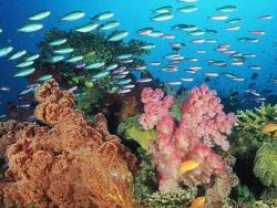 sfondi mare e pesci 26