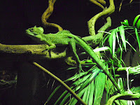 Reptile House - ZSL London Zoo