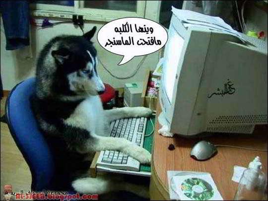 لماذا لا يستطيع غير الليبيين العيش في ليبيا؟؟ Al-3jeeb.blogspot+%25283%2529