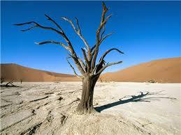 Beautiful Desert